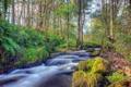 Картинка мох, река, деревья, поток, лес, камни