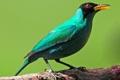 Картинка дерево, птица, цвет, ветка, перья, клюв