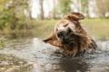 Картинка вода, брызги, собака
