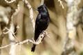 Картинка ветки, птица, черная