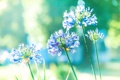 Картинка свет, цветы, природа, лепестки, стебель