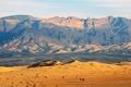 Картинка горы, пустыня, верблюды, jordan, Иордания