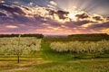 Картинка пейзаж, весна, сад