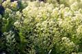 Картинка лето, цветы, полевые