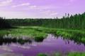 Картинка лес, небо, трава, облака, деревья, река, зарево