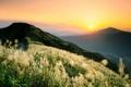 Картинка дорога, трава, закат, горы, холмы, колоски, пушистые