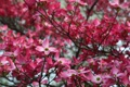 Картинка природа, весна, красота, фото, цветы