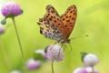 Картинка цветы, природа, бабочка, крылья, луг, мотылек