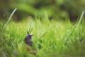 Картинка трава, улитка, размытость, рожки