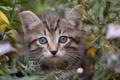 Картинка котёнок, трава, мордочка, взгляд
