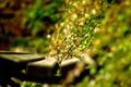Картинка листья, солнце, свет, скамейка, растения, день, лавочка