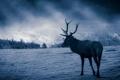 Картинка ночь, природа, олень