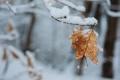 Картинка листья, снег, зима