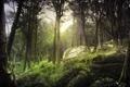 Картинка лес, свет, природа, камни, мох
