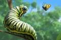 Картинка лес, гусеница, бабочка, арт