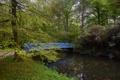 Картинка деревья, мост, пруд, парк, Нидерланды, тропинка, Elswout
