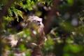 Картинка морда, солнце, свет, заросли, хищник, грива, дикая кошка