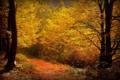 Картинка осень, краски, листва, дорожка, лавка