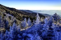 Картинка леса, деревья, панорама, зима, горы, снег