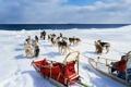 Картинка зима, собаки, снег, маламут