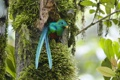 Картинка птица, хвост, дупло, зеленая птичка