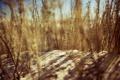 Картинка песок, макро, фото, обои, растение, растения, пески