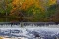 Картинка осень, лес, деревья, река, водопад, пороги