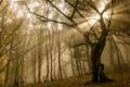 Картинка осень, ветки, солнце, листва, Лес, деревья, туман