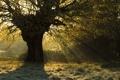 Картинка природа, свет, дерево