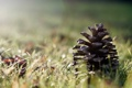 Картинка трава, макро, шишка