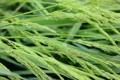 Картинка трава, вода, природа