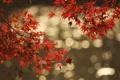 Картинка листья, осень, блик, отражение, вода, ветка
