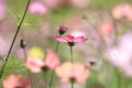 Картинка поле, цветок, макро, лепестки, стебель, луг