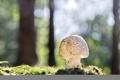 Картинка лес, гриб, мох