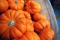 Картинка осень, урожай, тыквы, много, миниатюрные