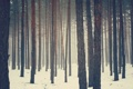 Картинка зима, лес, снег, сосны, бор