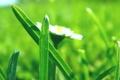 Картинка трава, макро, цветы, свежесть, природа, весна, весенние картинки