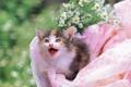 Картинка cat, Цветы, котенок