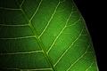 Картинка green, black, leaf