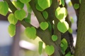 Картинка природа, листья, дерево