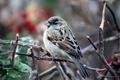 Картинка Nature, bird, birds, morning, day, Macro, natural
