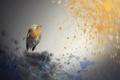 Картинка фон, птица, цвет