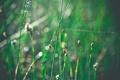 Картинка трава, капли, макро, блики, блеск, утро