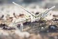 Картинка иней, трава, макро, снег