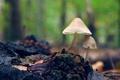 Картинка фон, грибы, размытость, пенек