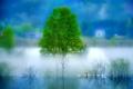 Картинка пейзаж, туман, река, дерево, утро