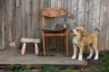 Картинка кошка, фон, собака