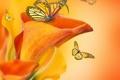 Картинка бабочки, цветы, бутоны, flowers, каллы, butterflies, buds