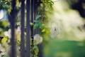 Картинка макро, забор, растение