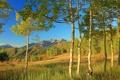 Картинка осень, листья, деревья, горы, склон, Колорадо, США